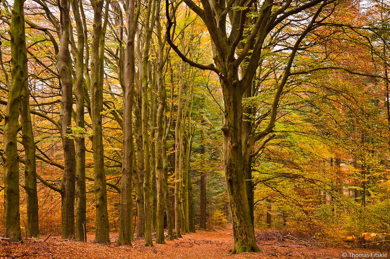Herfstkleuren - Foto van afgelopen maand, prachtige herfskleuren in het bos.