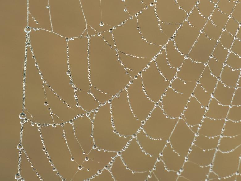 Druppelweb - De mooie kant van een mistige dag