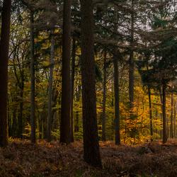 Licht in het donkere bos