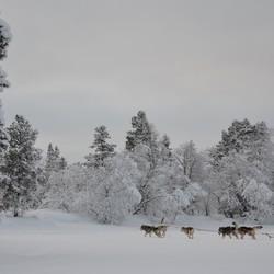 de stilte van de sneeuw