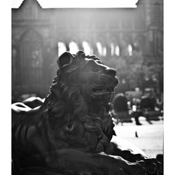 Liege in black&white 2