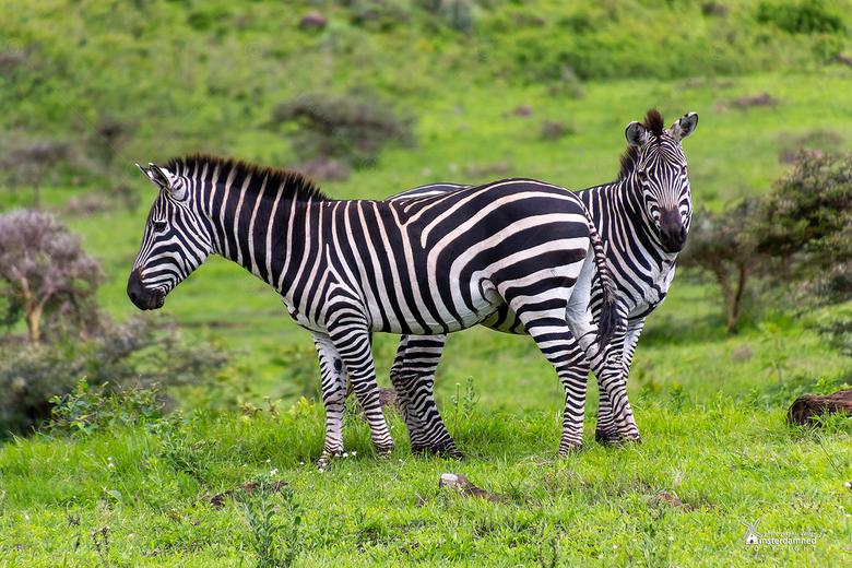 Tanzania - Arusha National Park ligt op 50 kilometer afstand van Mount Kilimanjaro en op nog geen uur rijden vanaf het vliegveld Kilimanjaro Internati