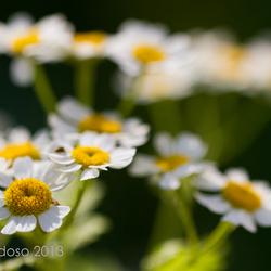 Straat bloemen