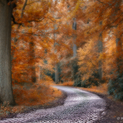 Road to Fairyland