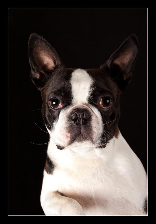 Doggie - een erg leuk hondje ( van een goede kennis van me,)  wilde wel op de foto<br /> <br /> Effies in het groot bekijken<br /> Heel erg bedankt