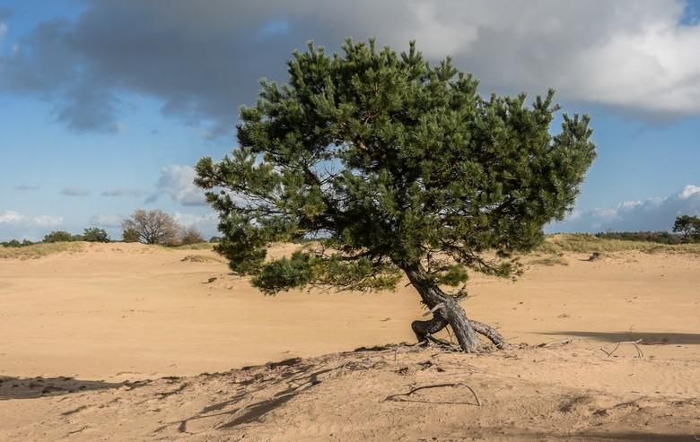 De Kale Duinen - De Kale Duinen maken deel uit van Nationaal Park Drents-Friese Wold. Ruim 6000 hectare bos, heide, vennetjes en veengebieden in het z