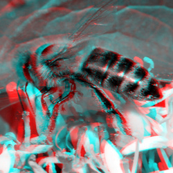 Bee Lumix Modified H-FT012 10+ 3D macro anaglyph stereo red-cyan