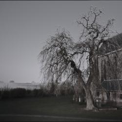 de grote boom en het kleine oude kerkhofje..