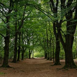 Het bos(pad)