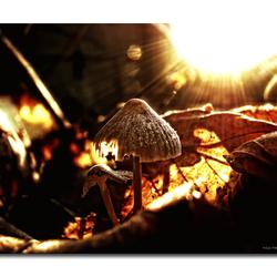 Mushroom2!!