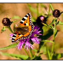 Nature Art 2011 -10