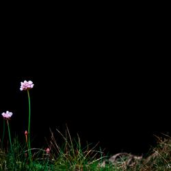 Eenzaam in het gras