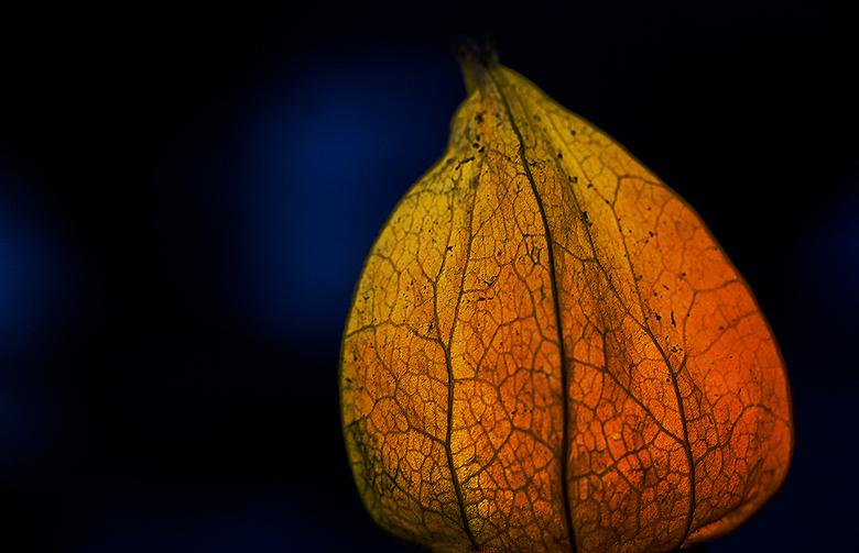 Light... - Een lampion in de duisternis...