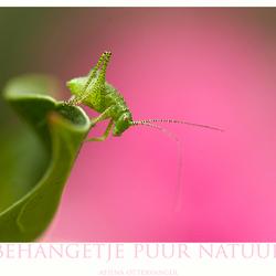 Behangetje puur natuur