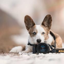 I am Nikon....