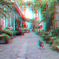 Straat met kat Haarlem 3D