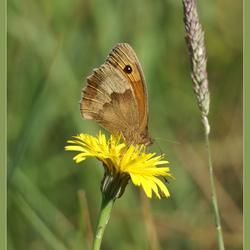 Natuurlijk een vlinder