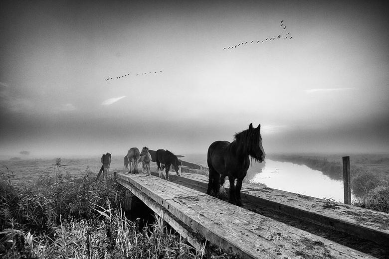 Paarden in z/w - Ik MOEST deze in zwart-wit bewerken. Als er één foto is die daarom vraagt, is het deze wel.