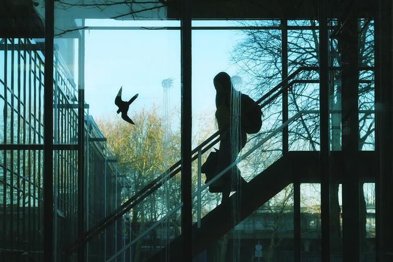 The bird -