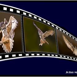 Roofvogel in zijn vlucht
