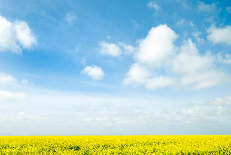 Weidsheid II - Nog een Texels plaatje van afgelopen weekend. Op de terugweg naar de boot vond ik zo'n mooi geel veld waar ik al het hele weekend