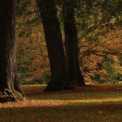 Het is herfst..... 2