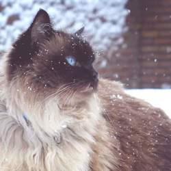 Gismo in de sneeuw