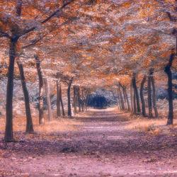 Een tunnel van bladeren