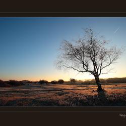 de savanne 6