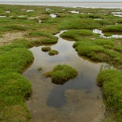 Kwelderlandschap langs de kust op Ameland