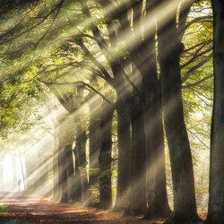 Intense sun rays