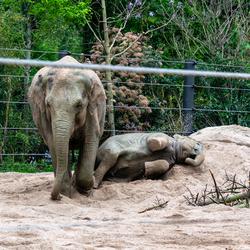 Zandbad olifantje Artis