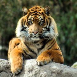 Geweldig dier, helaas in de dierentuin