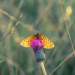 Illuminating Wings