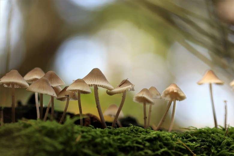 parmantig - paddenstoeltjes in mooi licht <br /> 17-10-2019