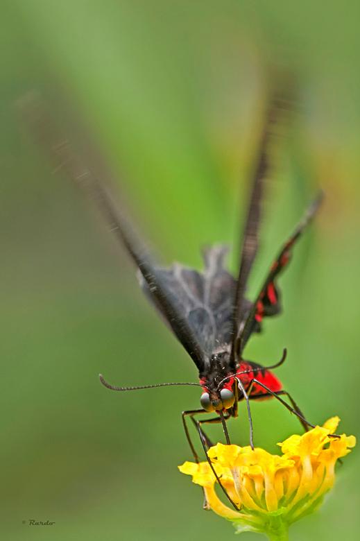 Acceleratie - Dank jullie wel  voor alle fijne en mooie reacties bij mijn serie van de vlinders. Misschien kan ik later dit jaar nog eens een andere s