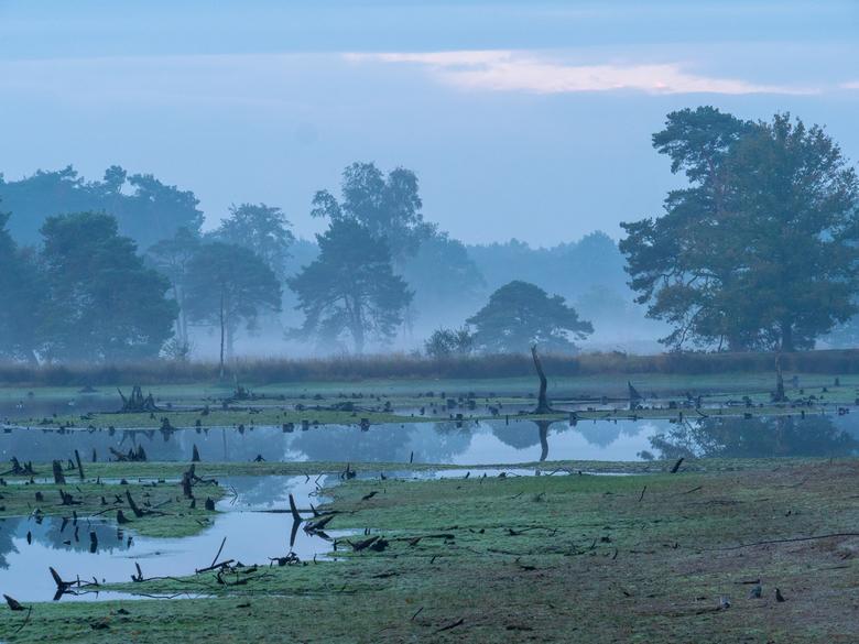 Foggy morning - Foggy Morning