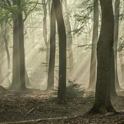 Bos met de Dansende Bomen,  28-08-2016 087
