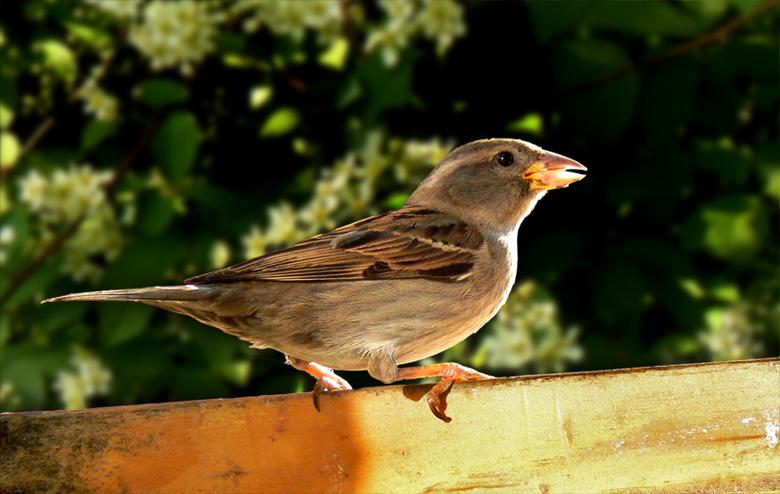 Veilig? - Terwijl wij vandaag de bevrijding vieren, is de uitspraak: &#039;zo vrij als een vogeltje&#039; niet vanzelfsprekend.<br /> <br /> Er zijn