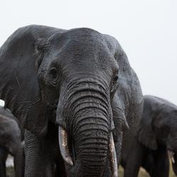 Tanzania - Serengeti 2011
