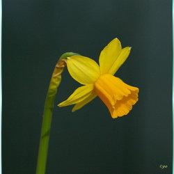 Stil verlangen naar de lente