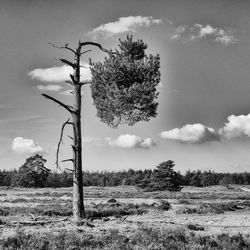 boom in landschap