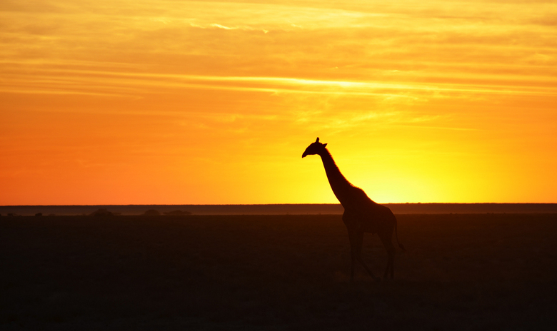 Safari Sunset III