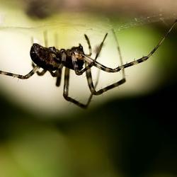 Spin onder web