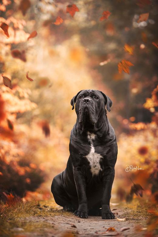 - Rufus - -