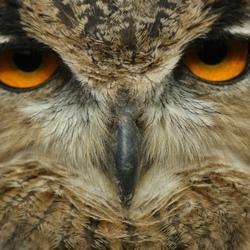 die blik....... oehoe........