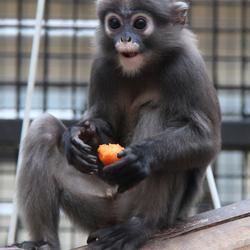 Schattig aapje