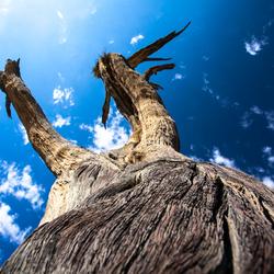 Dode geconserveerde boom