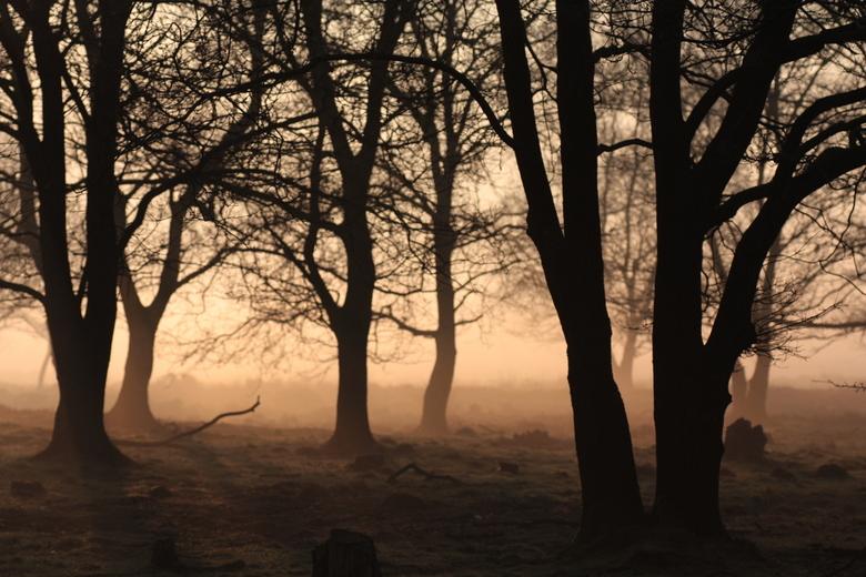 Zonsopgang in de mist - Tussen de contouren van de bomen kwam de zon op, op deze mistige morgen. Foto genomen in Nationaal Park Dwingelerveld
