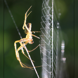 Webdancer
